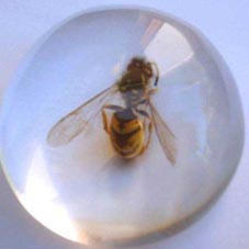 bee in glass